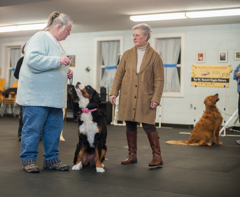Description of . Instructor Sherrie Start (left) and her dog Dancer work with Sandy Herzog during an exercise teaching dogs good citizenship toward strangers. (Sun photo by Holly Mahaffey/@hollymahaffey)