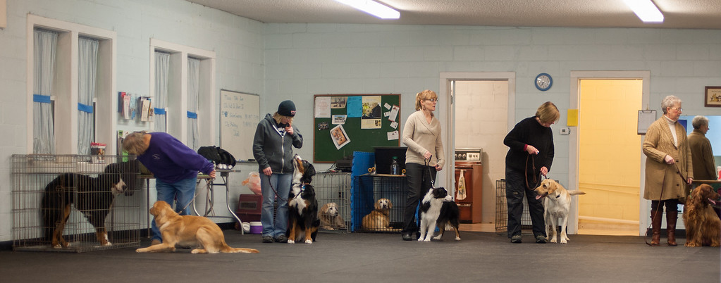 Description of . Attendees of the Canine Good Citizen program class line up to work on an exercise teaching the dogs to stay, and then come when called, which are aspects of the test needed to earn their certificates. (Sun photo by Holly Mahaffey/@hollymahaffey)