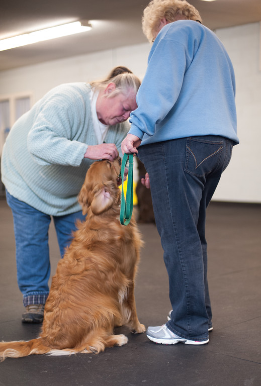 Description of . Canine Good Citizen program instructor Sherrie Start of the Mt. Pleasant Michigan Kennel Club works with Linda Switalski and her Golden Retriever Gracie on being comfortable when handled and touched. (Sun photo by Holly Mahaffey/@hollymahaffey)