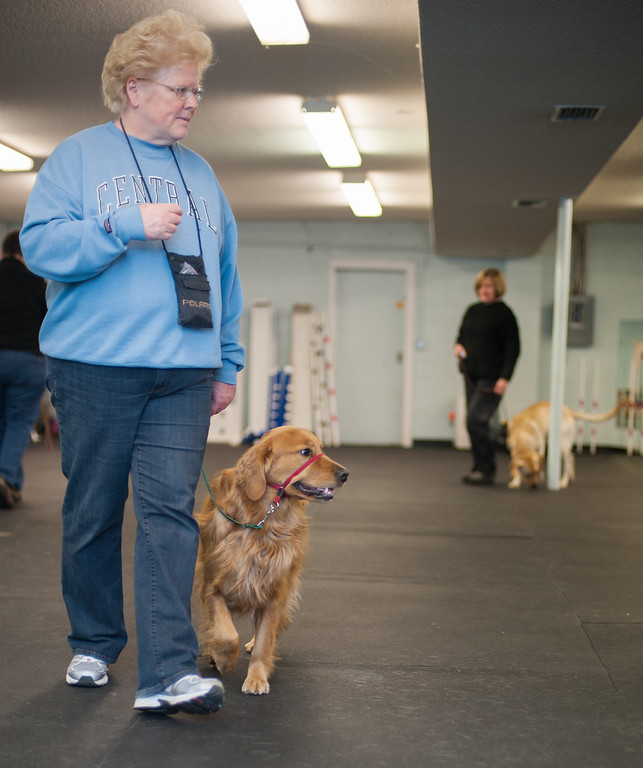 Description of . Linda Switalski and her Golden Retriever Gracie practice walking on a leash at the Mt, Pleasant Michigan Kennel Club in Mt. Pleasant on Thursday, Feb. 6, 2014. (Sun photo by Holly Mahaffey/@hollymahaffey)