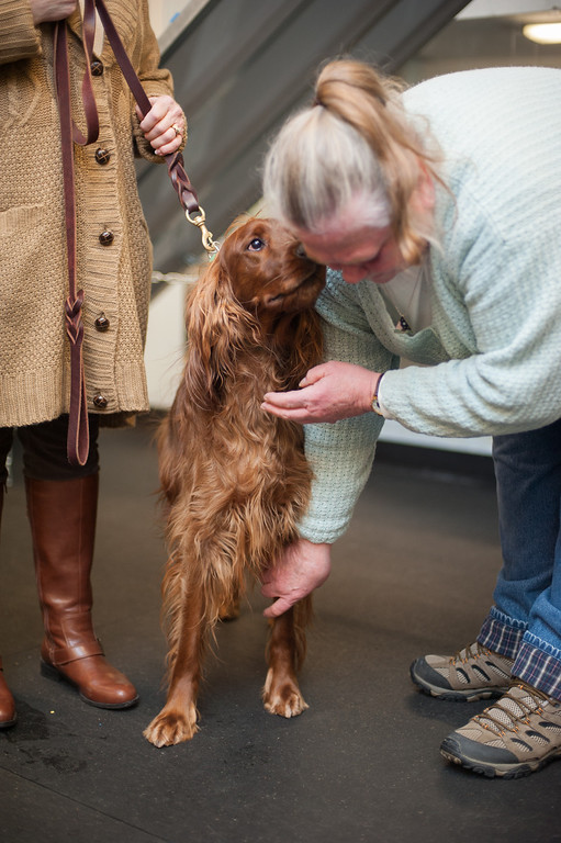 Description of . Canine Good Citizen program instructor Sherrie Start of the Mt. Pleasant Michigan Kennel Club works with Maddy Rose, a 2 1/2 year-old Irish Setter belonging to Sandy Herzog. (Sun photo by Holly Mahaffey/@hollymahaffey)