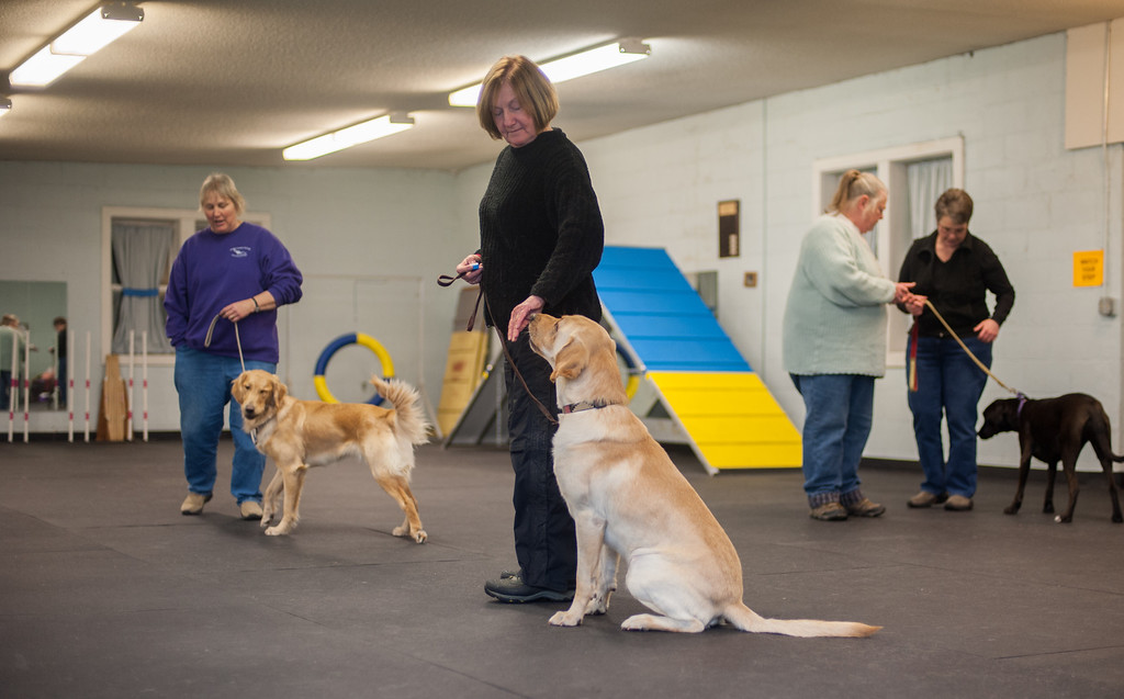 . Deb Marmarelli and her three-year-old Yellow Lab called Strider work on good citizenship at the Mt, Pleasant Michigan Kennel Club in Mt. Pleasant on Thursday, Feb. 6, 2014. (Sun photo by Holly Mahaffey/@hollymahaffey)